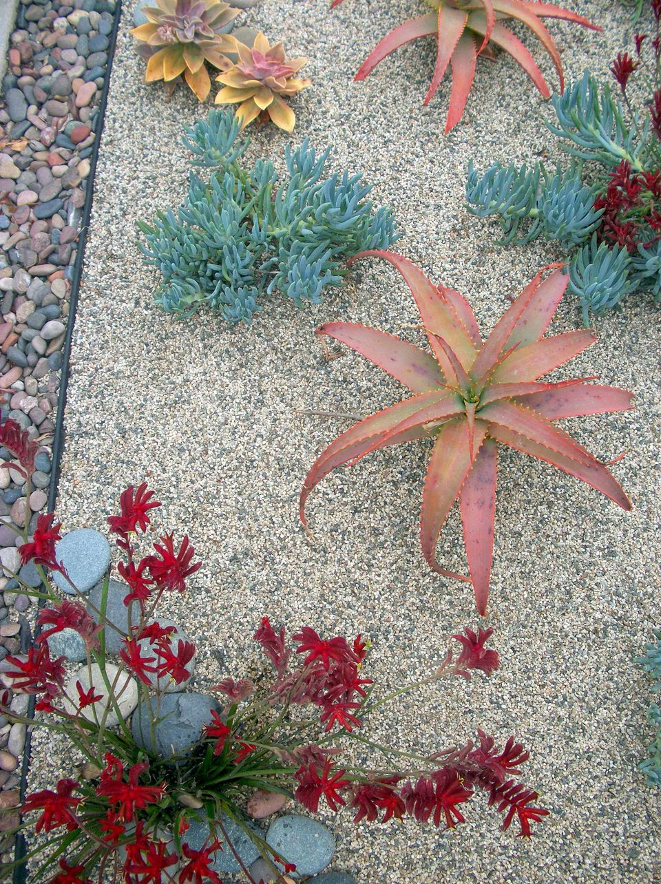 dry garden succulents wordless wednesday venice beach