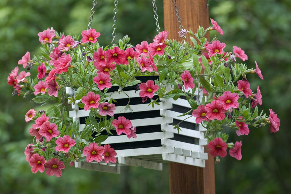 Hanging Flower Baskets Michaels : How to care for hanging plants