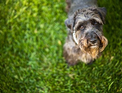 How Long Should I Give My Dog Heartworm Medicine