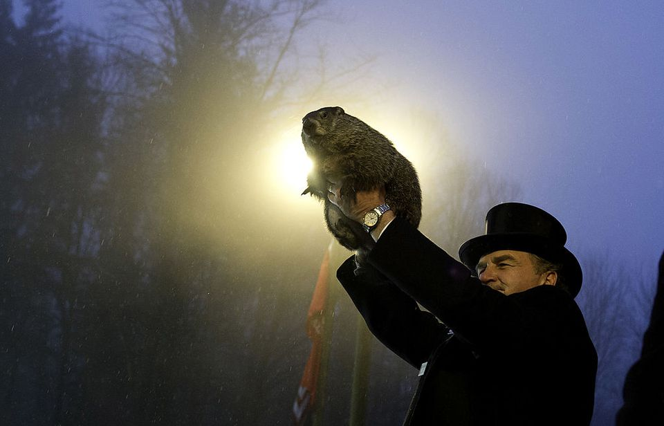 Phil the groundhog emerges in Punxsutawney, Pennsylvania.