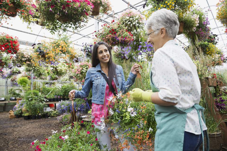Worker helping woman with hanging baskets in greenhouse