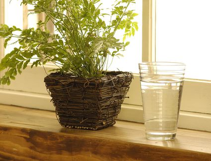 What To Do If Your Houseplant S Leaves Turn Brown