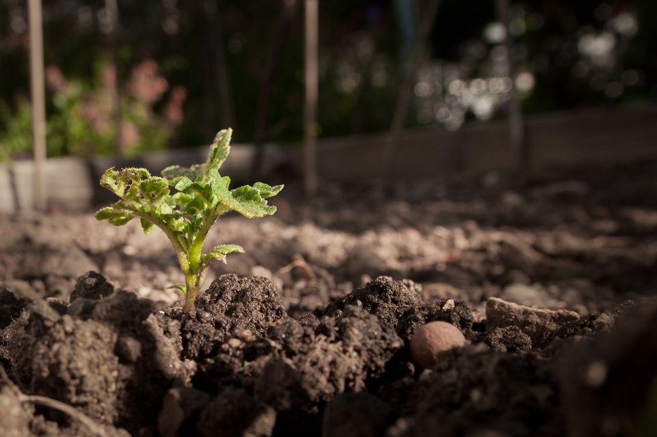 Healthy soil maintenance