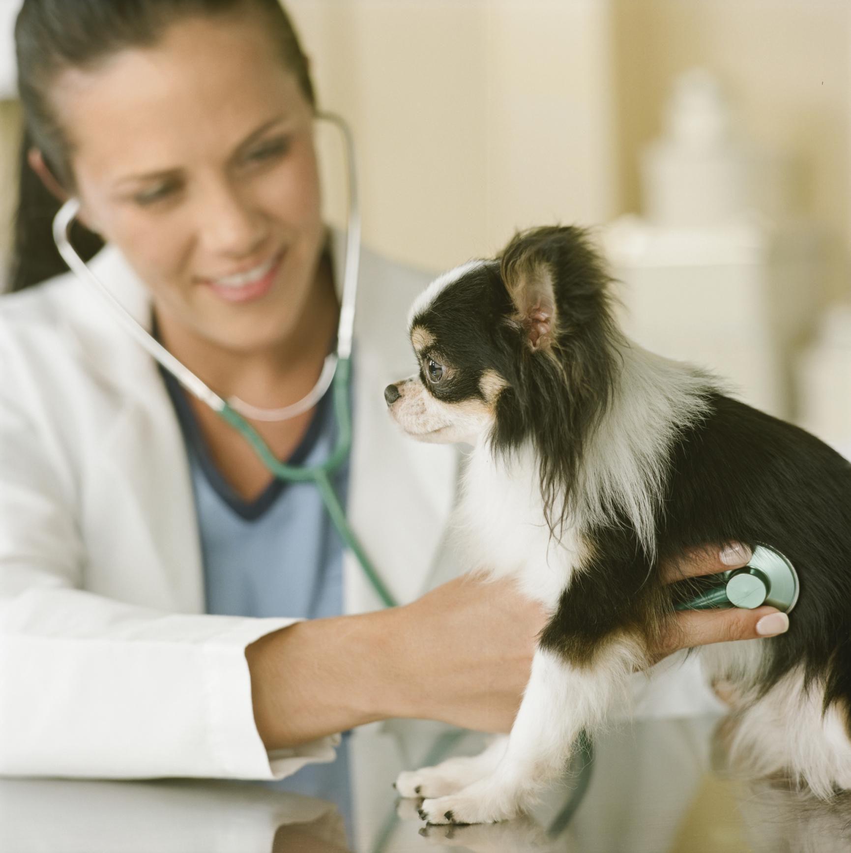 2017 06 search price list veterinary clinic - Relief Veterinarian Career Profile