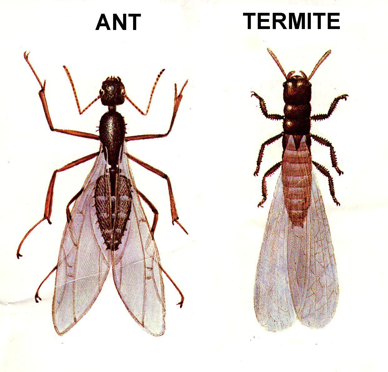 10 Tips on How to Control Flying Ants. What to Do About Flying Ants in Your Home