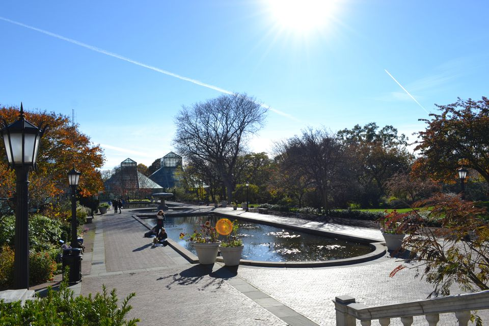 A reflective pond at the Brooklyn Botanical Gardens.