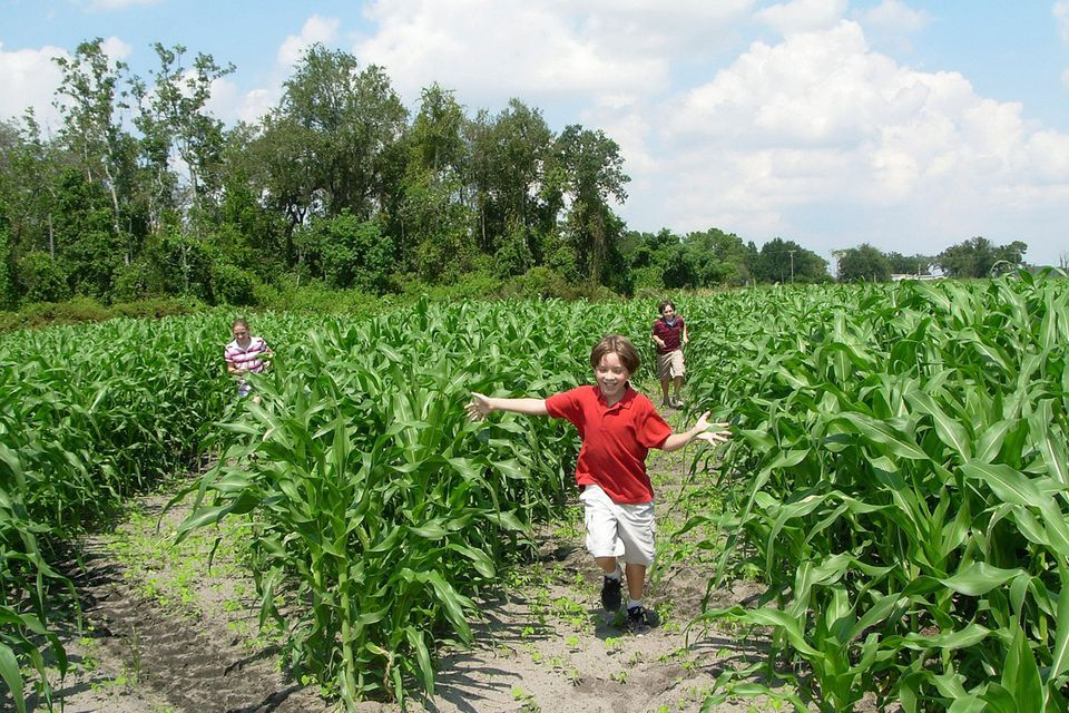 Mount Dora's Amazing Scott's Maze Adventures Corn Maze
