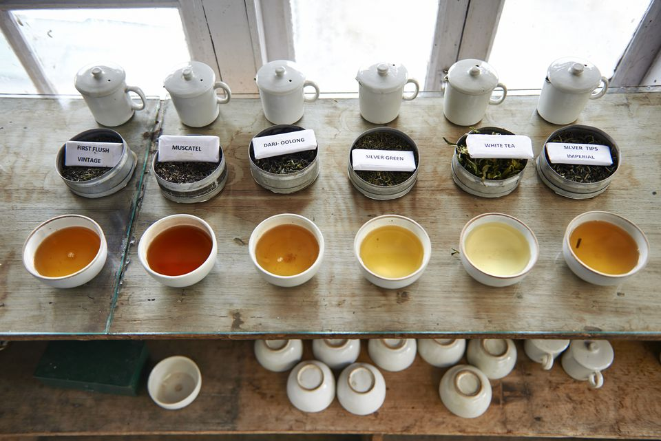 Various tea samples on display