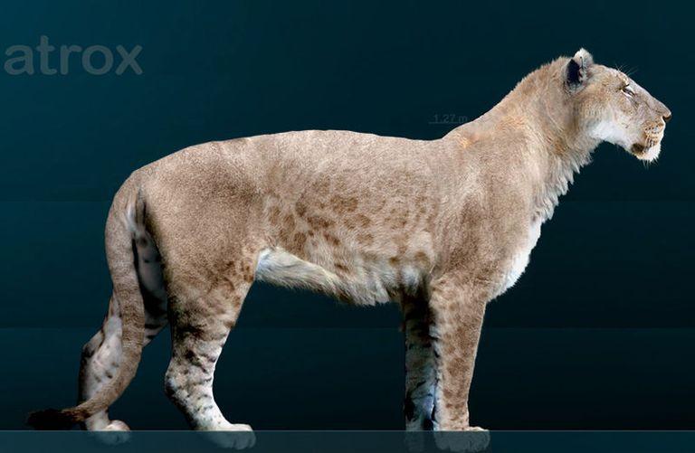 american lion panthera leo atrox